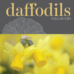 Sweetpea's - Shop Daffodil Bulbs