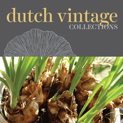Sweetpea's - Shop Dutch Vintage Fall Planting Bulbs