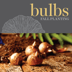 Sweetpea's - Shop All Fall Planting Bulbs
