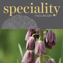 Sweetpea's - Shop Speciality Bulbs