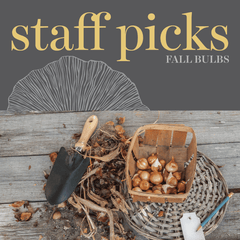 Sweetpea's - Shop Staff Favourites Fall Planting Bulbs