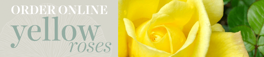 Sweetpea's Toronto Florist - Yellow Rose Bouquets for Delivery