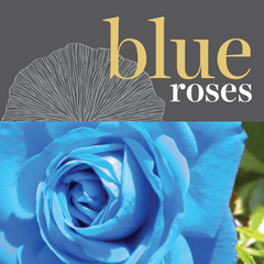 Sweetpea's Toronto Florist - Fresh Blue Roses for Valentine's Day Toronto Delivery