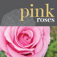 Sweetpea's Toronto Florist - Fresh Pink Roses for Valentine's Day Toronto Delivery