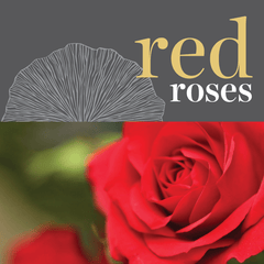 Sweetpea's Toronto Florist - Fresh Red Roses for Valentine's Day Toronto Delivery