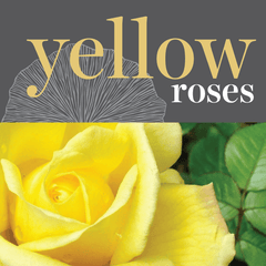 Sweetpea's Toronto Florist - Fresh Yellow Roses for Valentine's Day Toronto Delivery