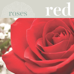 Sweetpea's - Order Red Roses for Toronto Delivery