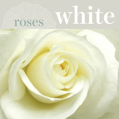Sweetpea's - Order White Roses for Toronto Delivery