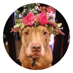 Sweetpea's - Stuff on Scout's Head, Floral Crown