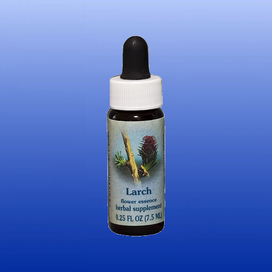 Larch Flower Essence 0.25 oz
