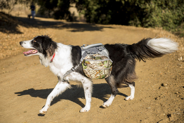 2-pack Dog Backpack