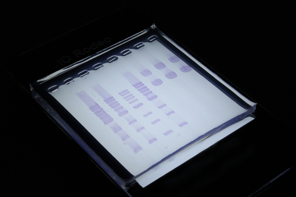 White LED light box for gel imaging