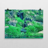'Green Upon the Rocks' Poster by Momotaro Photography