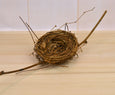 Birds Nest on a Twig for Easter Egg Display