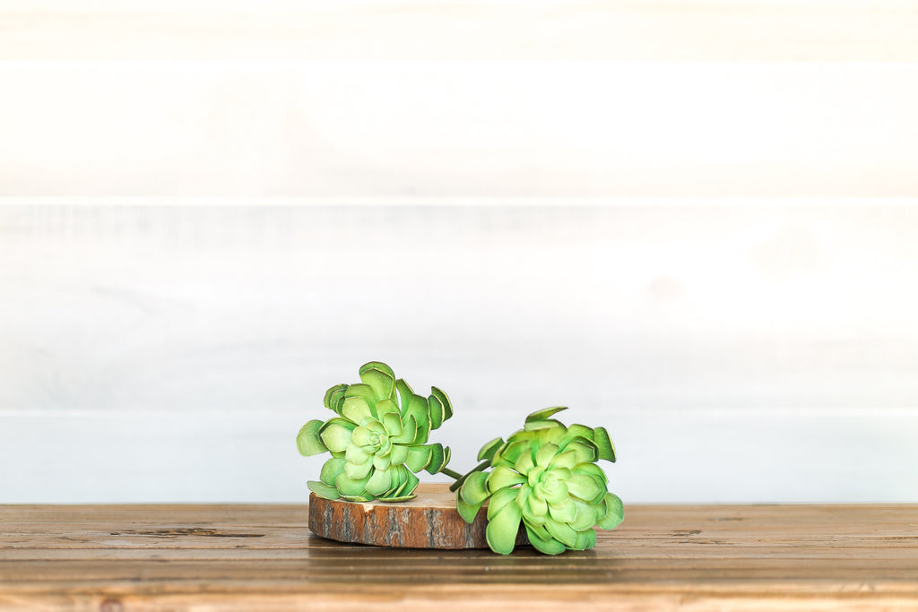 Green Succulent Set of Two