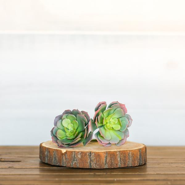 Rose Tipped Succulent Set of Two