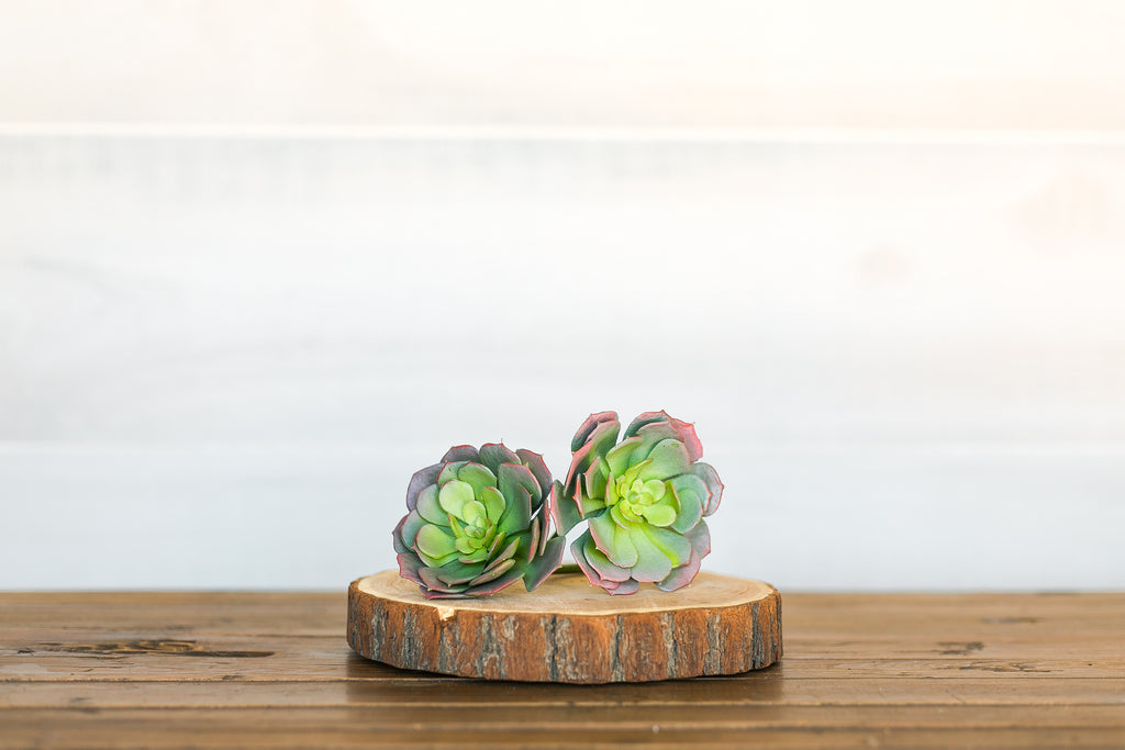 Rose Tipped Succulent