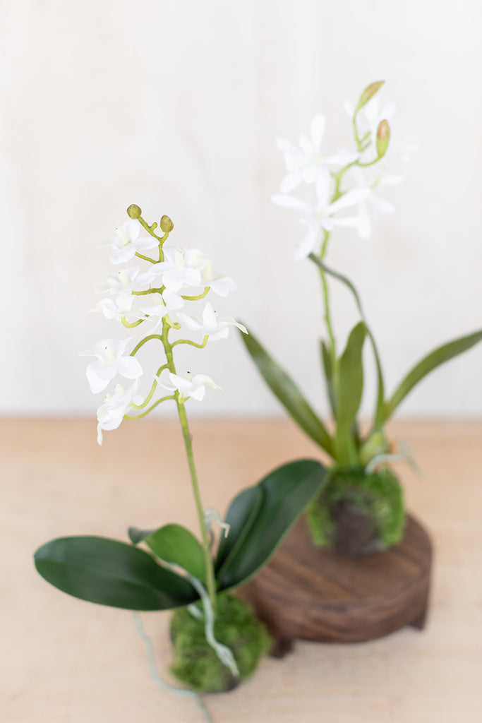 Set of 2 Dendrobium Drop-Ins