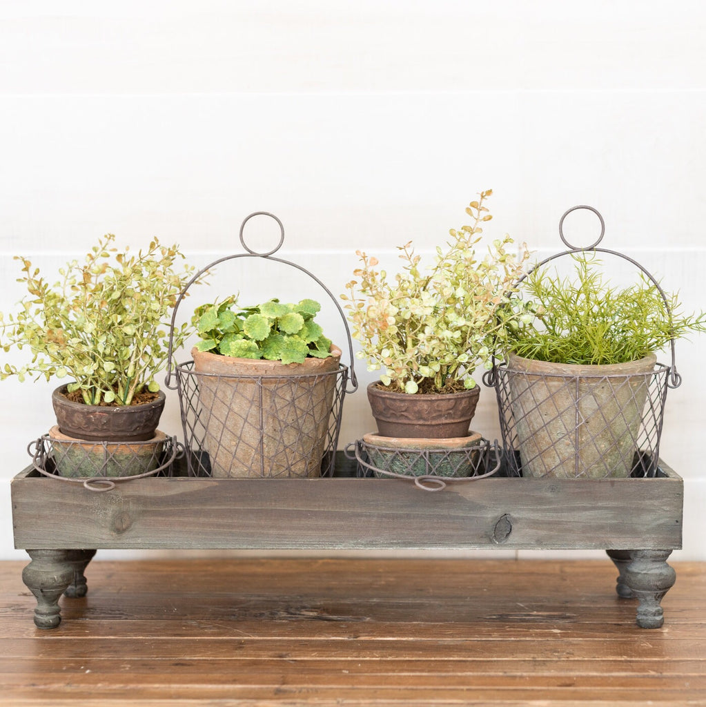 Mini Potted Plant Set