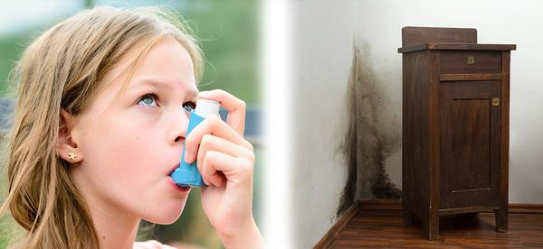 Understanding the Link Between Mold and Asthma