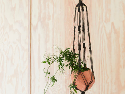 Nature Channel Plant Hanger against a beautiful plywood wall