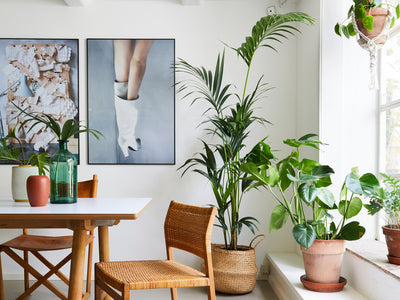 SIngle Plant hanger, Rikke's home in Copenhagen