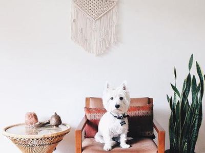 Dogs of Macrame
