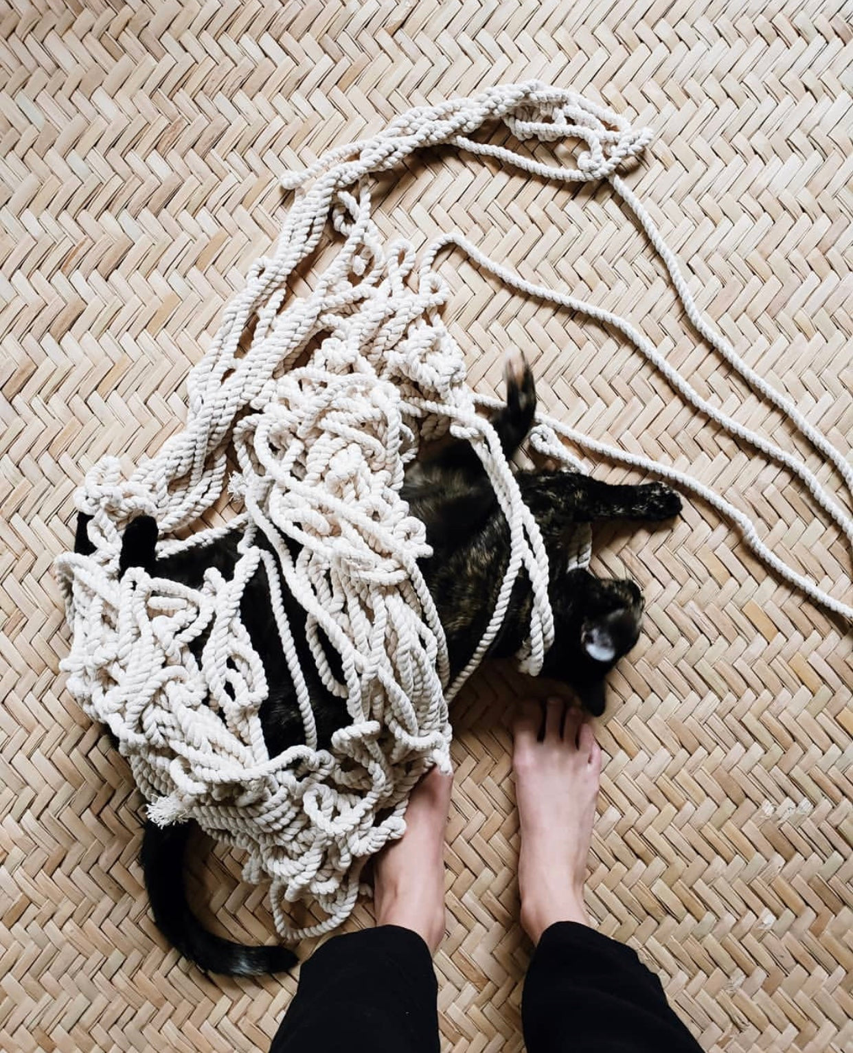 Black cat all tangled up in macramé rope