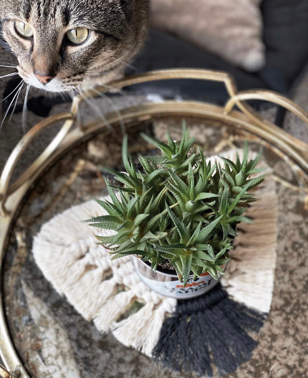 Bob the Cat with a macramé coaster and plant