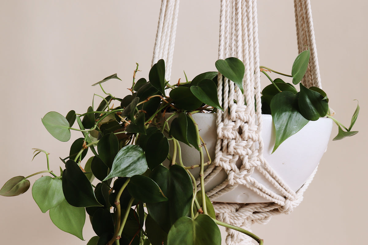 Summer Goals Plant Hanger Pattern - Download