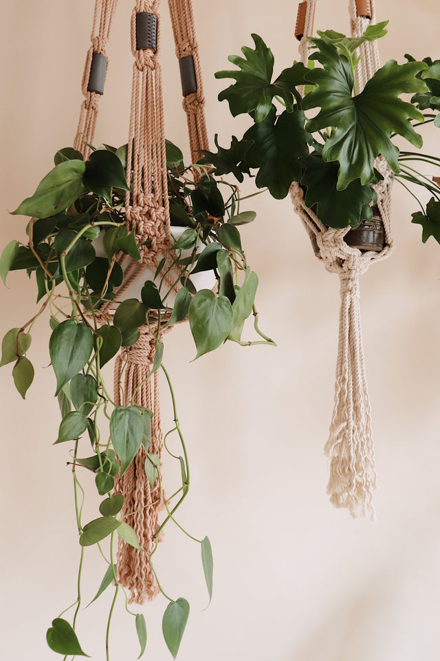 learn how to make a macrame plant hanger