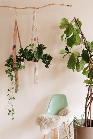 Easy DIY plant hanger pattern. Perfect for Beginners. Learn Macrame with Modern Macrame
