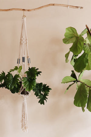 Make your own DIY macrame plant hanger with our brand new kit!