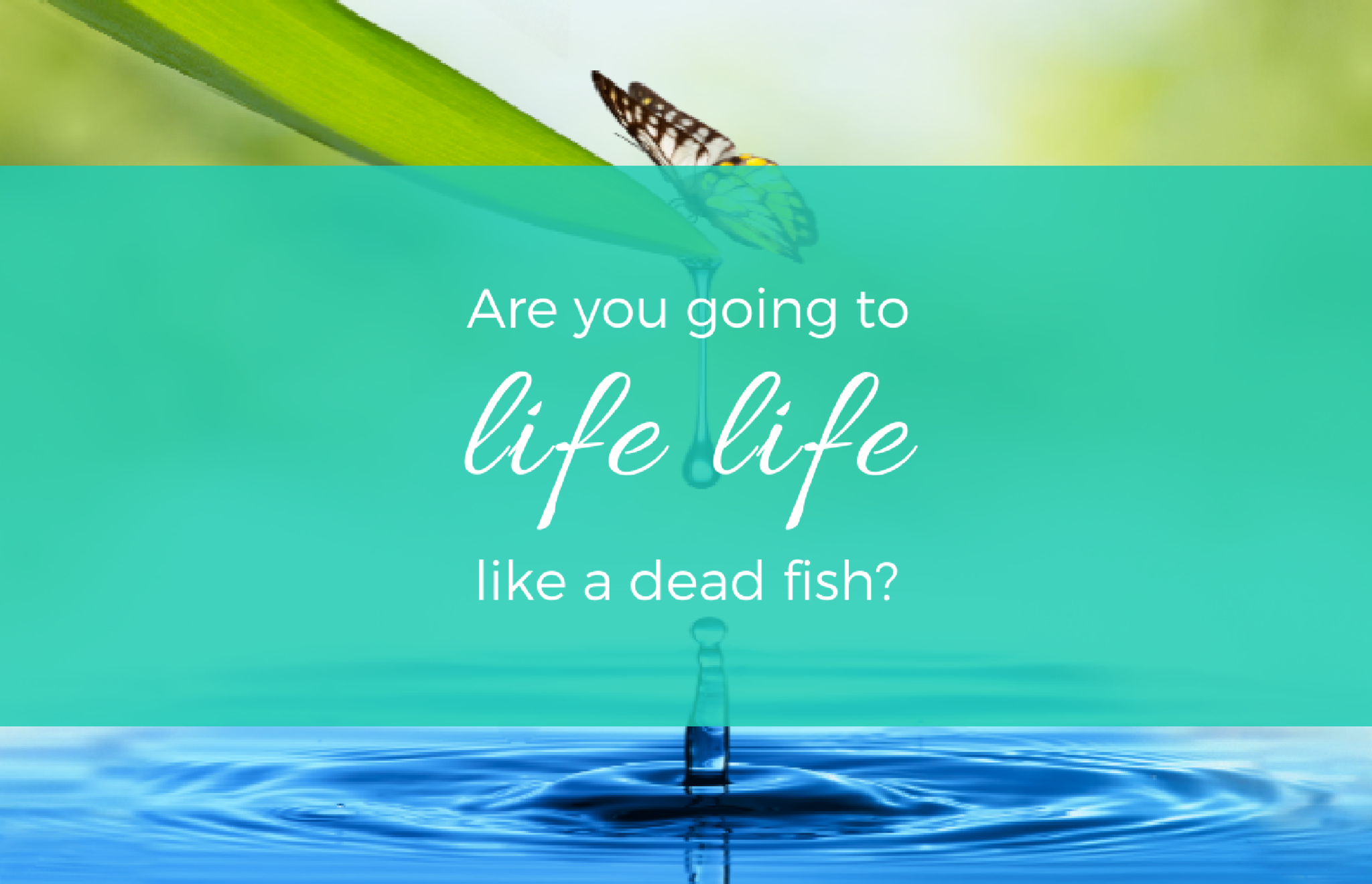 Are you going to live life like a dead fish?