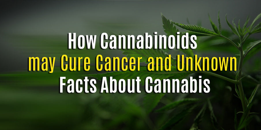 Cannabinoids Cure Cancer