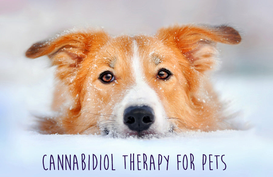 Cannabidiol Therapy for Pets