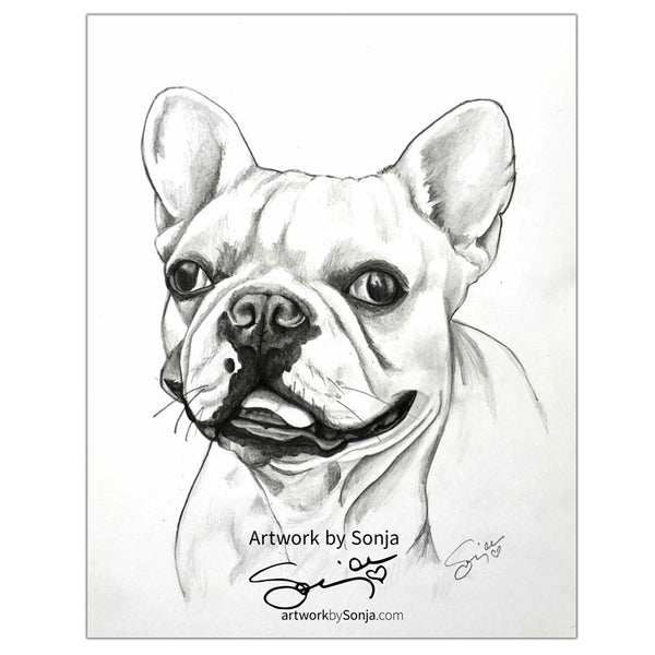Frenchie in Pencil