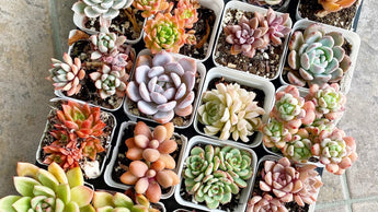 How to care for your succulent - Simplified