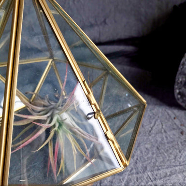 Diamond Geometric Terrarium