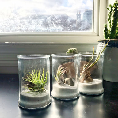Air Plant Favors - out of stock - accepting preorders