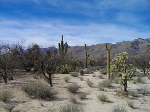 Agua Caliente Park, Tucson, Arizona - Art 4 Charities, LLC