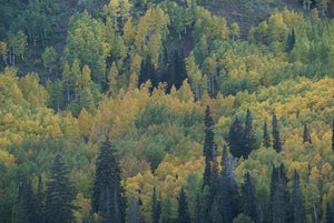 Autumn in Utah - Art 4 Charities, LLC