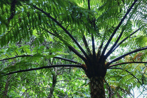 Beautiful Palm, Poas Volcano, Costa Rica - Art 4 Charities, LLC