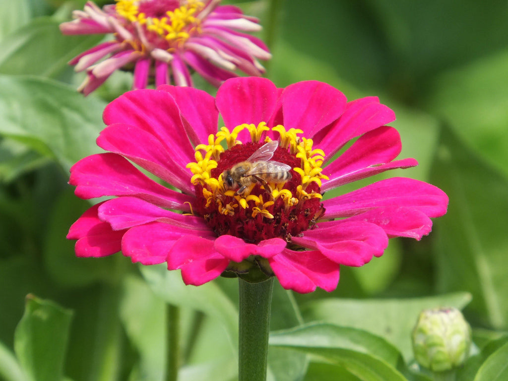 Bee On A Flower - Art 4 Charities, LLC