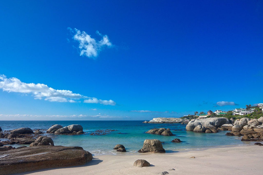 Boulders Beach, South Africa - Art 4 Charities, LLC