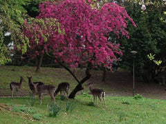 Deer In The Park, Germany