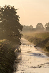 Ducks in Morning Mist, North Rhine-Westphalia, Germany
