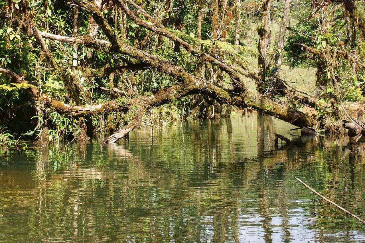 Fallen Tree over Pond, Puntarenas, Costa Rica