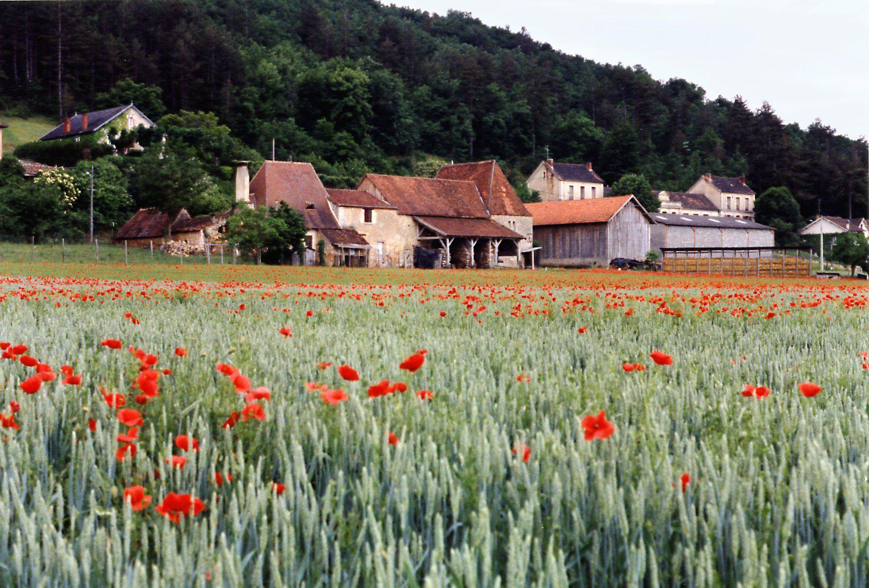 Field of Red Flowers, France