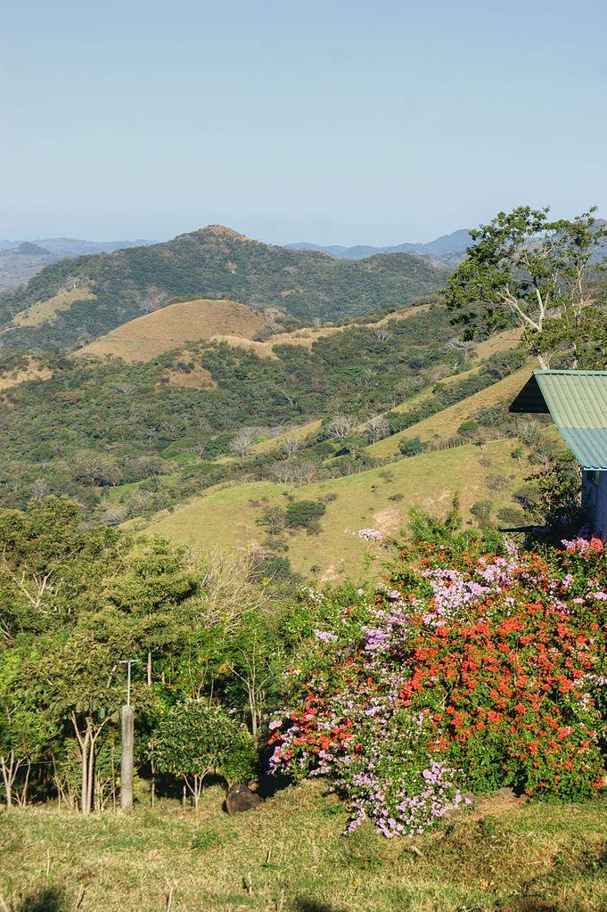 Flowers on the Hillside, Puntarenas, Costa Rica
